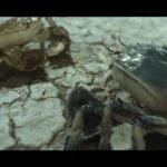 anpu-ZOEA-FRFF-short film festival-2020-3